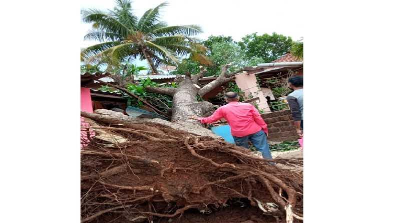 Pandurang Ghug Tree collapse